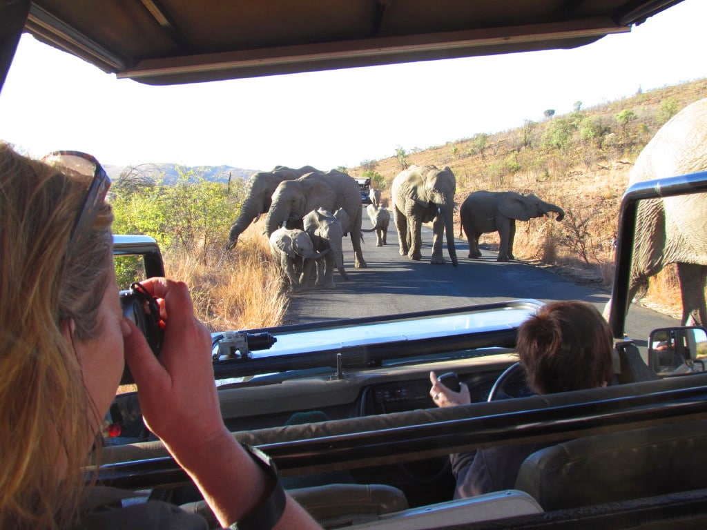 Pilanesberg National Park Day Safari