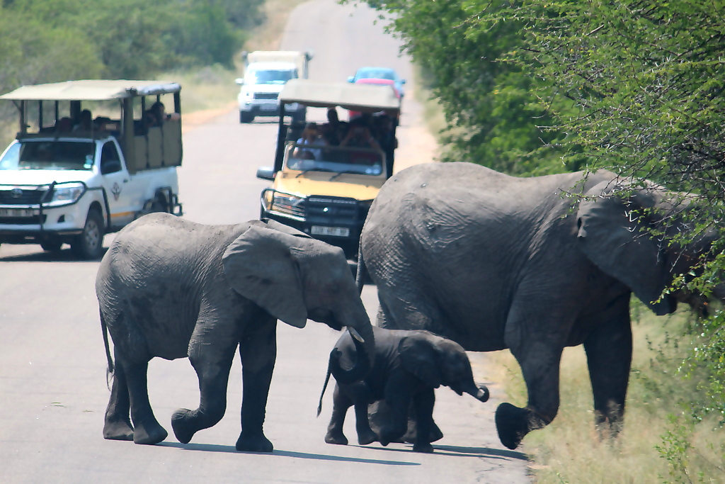 Kruger National Park 2 Days