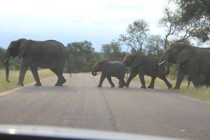 Kruger National Park Safaris