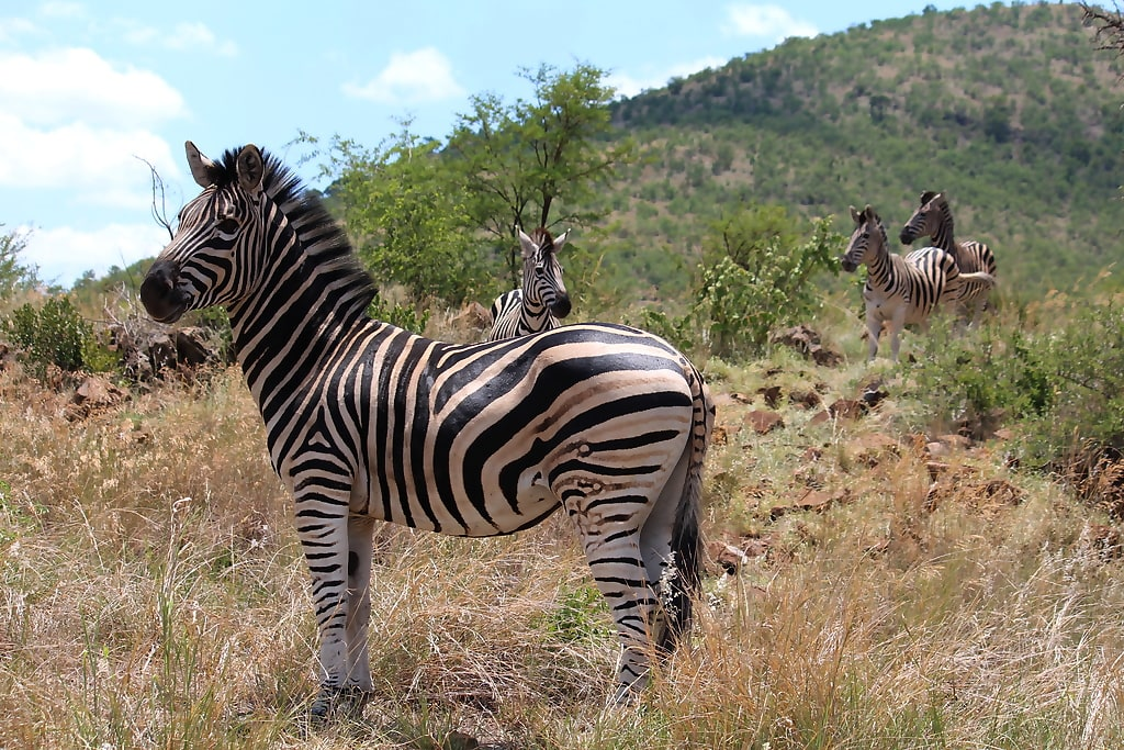 Pilanesberg National Park 2 Days