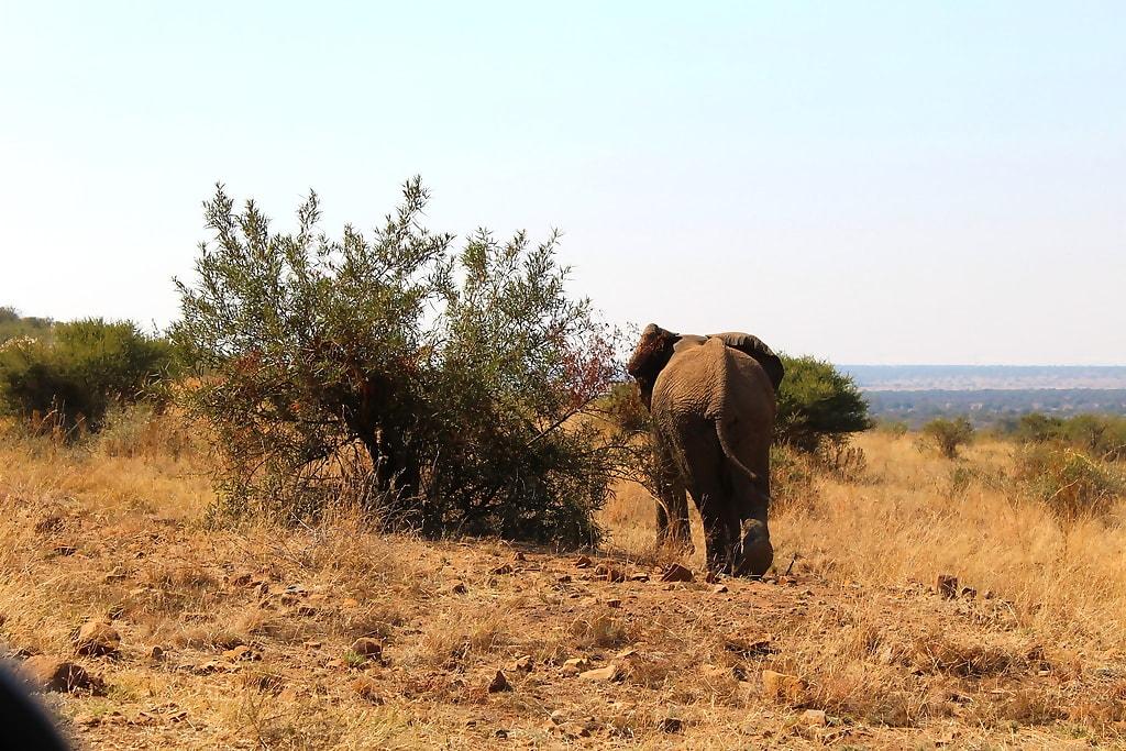 Pilanesberg National Park Safari Closed Vehicle
