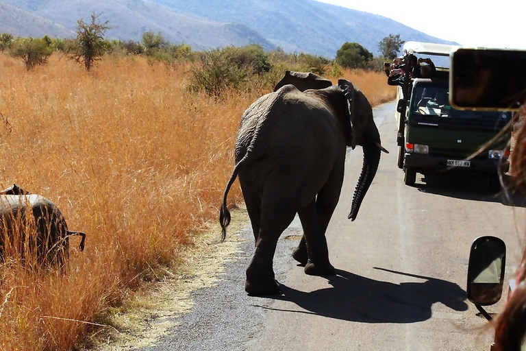 Pilanesberg National Park Safari Open Vehicle