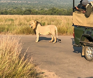 Private Pilanesberg National Park Open Vehicle Safari with Lion Park Safari