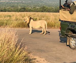 Private Pilanesberg National Park Open Vehicle Safari with Lion Park Safari
