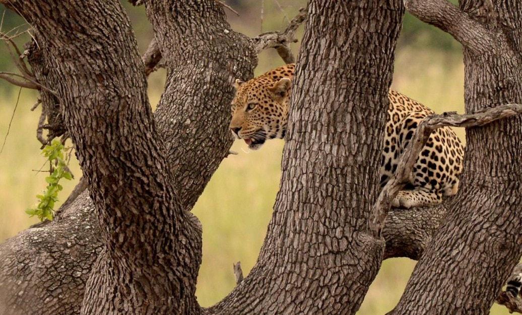 Kruger National Park 2 Day Safari