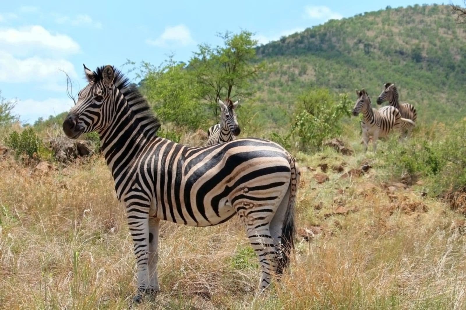 Private Pilanesberg National Park & Lion Park Safari