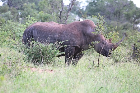 Kruger National Park 2 Days Safari