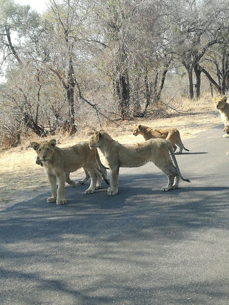 Day 5 – Hazy View – Kruger National Park Safari
