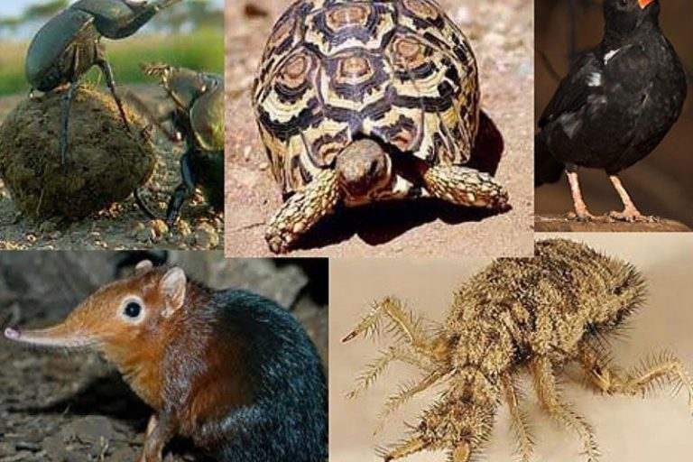 Small 5 of Kruger National Park Safari